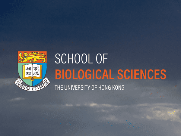HKU SBS Hong Kong Website Design and Development